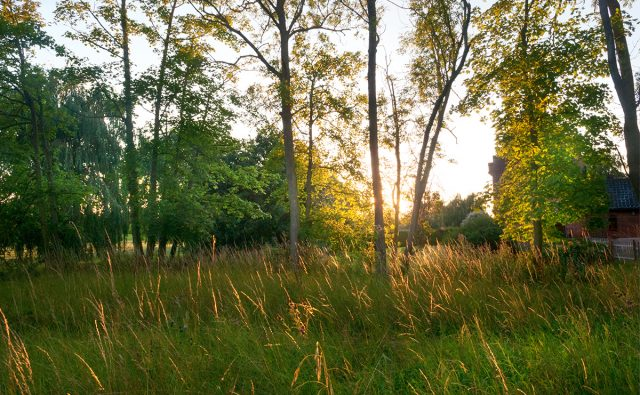 Landscape Design Suffolk